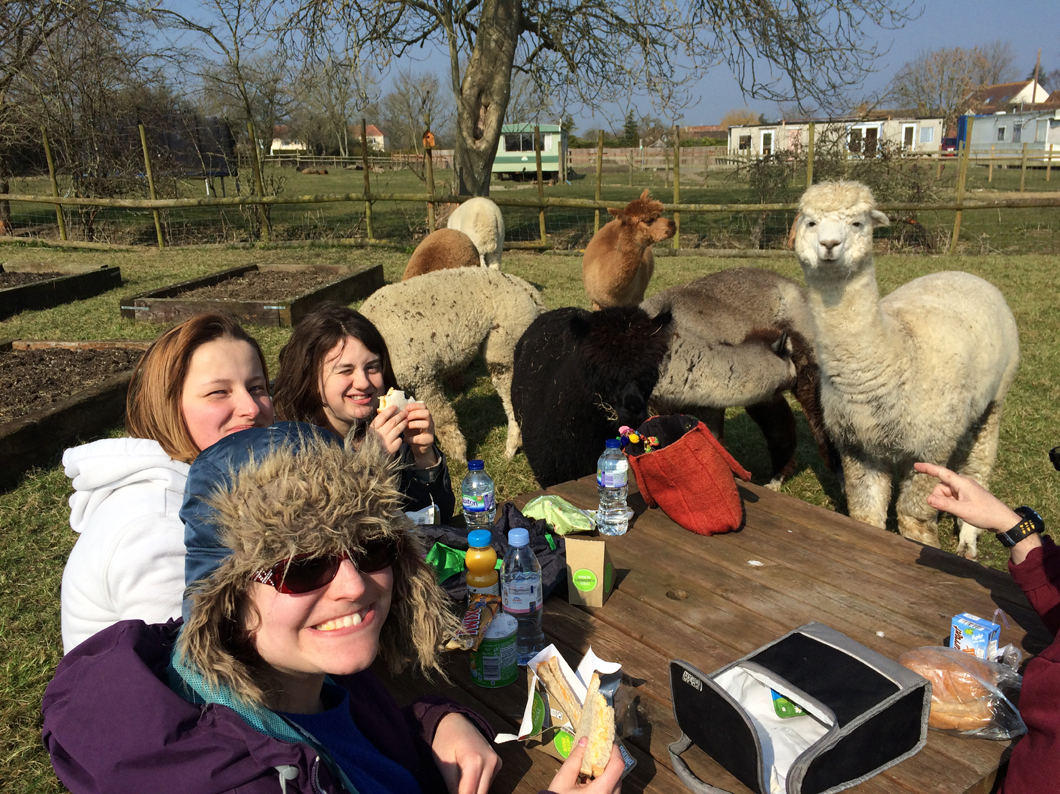 Lunch with alpacas